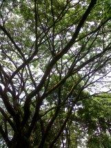 just tree